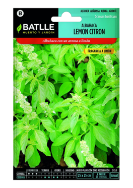 Albahaca Lemon Citron